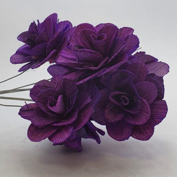 Flori acacia mov